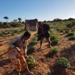 L'assurance climatique : Un mécanisme de transfert des risques liés aux impacts des changements climatiques